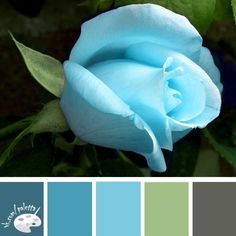 Blue rose color palette, light blue, turquoise, green, grey, dust blue