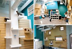 More Green Shelter Design: Friends For Life in Houston Opens LEED Certified No Kill Animal Shelter