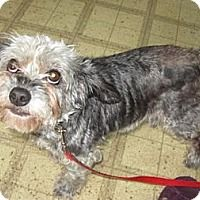 Adopt A Pet :: CANDE (SRC#1633)  IN HOSPICE CARE - Lenoir, NC