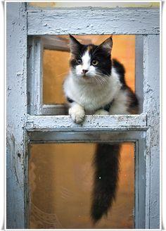 Фото, автор aig1001 на Яндекс.Фотках