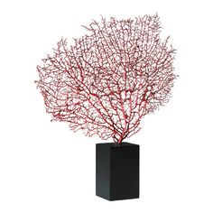 Red Sea Fan With Base by Cyan Design 1929