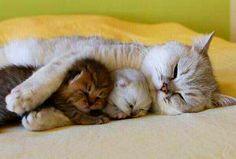 Nada como el abrazo de mamá.  #Kitties #Love