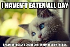 The Best Of First World Cat Problems