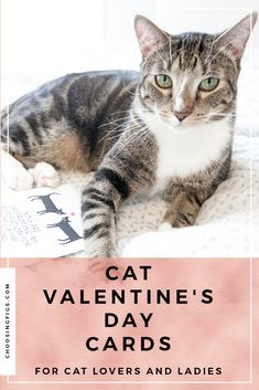 Cat Valentine's Day Cards for Cat Lovers and Ladies