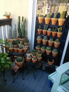 My little Cacti collection on the balcony. Succulent Gardening, Cacti And Succulents, Planting Succulents, Planting Flowers, Indoor Cactus Plants, Terrarium Plants, Cool Plants, House Plants Decor, Plant Decor