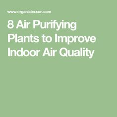8 Air Purifying Plants to Improve Indoor Air Quality