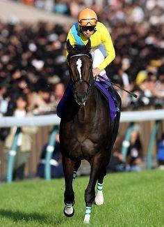 グランプリ・有馬記念は出走できなかったが、2年連続で年度代表馬に選出された、女傑・ウオッカ(VODKA)