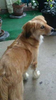 LOST DOG: 07/02/2017 - Pacific Beach, San Diego, California, CA, United States. Ref#: L32529 - #CritterAlert #LostPet #LostDog #MissingDog