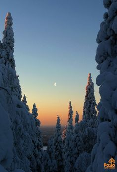 Riisitunturi landscape Winter Scenery, Winter Trees, Winter Beauty, Moonlight, Winter Wonderland, Sunsets, Wilderness, Christmas Time, National Parks