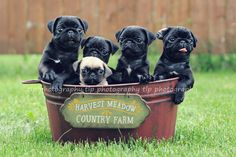 Our Puppies  June 2011    (photo by tlp photography) this is sooo cute.  i want one