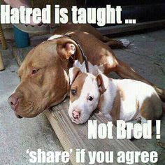 hatred is taught....