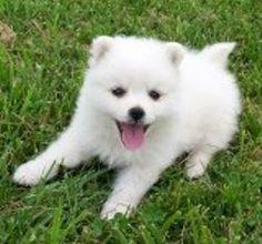 Penmar Kennels has cute puppies for sale!