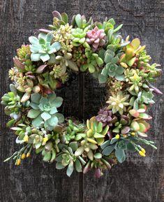 34 Ideas For Succulent Wreath Ideas - Badezimmer Deko Ideen Succulent Centerpieces, Succulent Wreath, Succulent Gifts, Succulent Arrangements, Succulent Terrarium, Floral Arrangements, Succulent Containers, Container Flowers, Container Plants