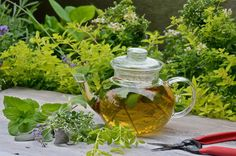 19 Best Tea Herbs to Make a Tea Herb Garden Cilantro Plant, Chives Plant, Balsamic Vinegar Dressing, Hibiscus, Growing Raspberries, Mint Plants, Types Of Herbs, Kitchen Herbs, How To Make Tea