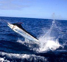 Azores Marlin Sportfishing