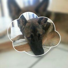 Achtung Hund,hundeschild,warnschild,gravurschild,12 X 8 Cm,freilaufender Hund Hunde Schilder & Plaketten