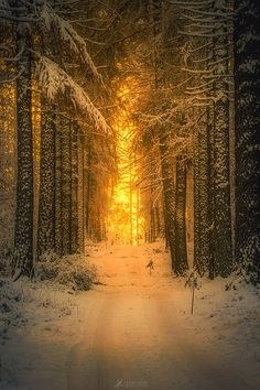 Sunrise at the snowy forest in Finland
