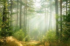 Fotobehang - Zonlicht in bos - 390x260 cm. Vliesbehang 200 grams. Banen van 150 cm breedte. Art. BF009.58