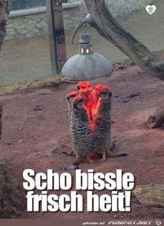 lustiges Bild 'Bissle frisch.jpg'- Eine von 23403 Dateien in der Kategorie 'witzige Bilder' auf FUNPOT.