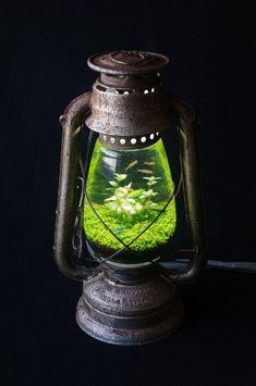 ランプ水槽2