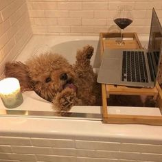 "Just look at this stay-at-home QT! 🍷🛁🐶 People are adopting ""pandemic pets,"" and it's restored my faith in humanity. Link in bio for more… Tyler The Creator, Kanye West, Cute Puppies, Cute Dogs, Mood, Goldendoodle, Cute Baby Animals, Tgif, Puppy Love"