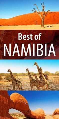 Best places to see in Namibia. 13 fascinating locations, from the most famous tourist attractions to the hidden gems. Find out! Africa Destinations, Travel Destinations, Travel Tips, Food Travel, Holiday Destinations, Namibia Africa, Cool Places To Visit, Places To Travel, Safari