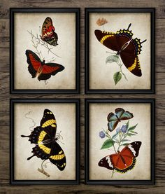Vintage Butterfly Print Set of 4  Butterfly Art by InstantGraphics