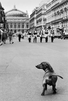 The real tourist attraction- dachshund