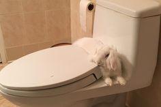 Hopsy sitting in her favorite spot