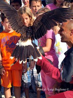 rapaci e bambini, educare al rispetto FALCONIERI DELL'AQUILA