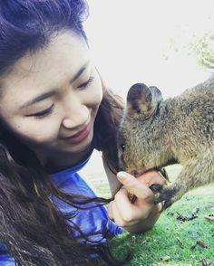 That time when I got really close with another mammal #australia #aussie #wa #rottnestisland #quokka #quokkalove #quokkaselfie #love #kiss #intimate #warmandfuzzy #nature #animals by missxmastrees http://ift.tt/1L5GqLp