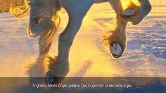 Les jeunes chevaux d'espoir galopent, l'âne d'expérience va doucement au pas.