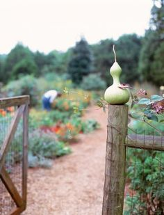 Gardening tips // GOURDS! ....raise your hand if you can't wait for fall!