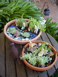 Fairy Gardens (pic only)