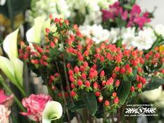 Különleges virág, különleges alkalomra! Plants, Red, Plant, Planets