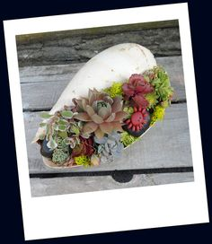 Sea Shell Garden Planter  Sweet Garden Gift  by TheSucculentJungle, $22.00