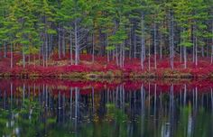 Ruby red reflections by Kevin McNeal