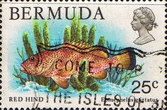Bermuda 1978 Wildlife Red Hind Fish SG 396 Fine Used Scott 372 Other West Indies and British Commonwealth Stamps HERE!