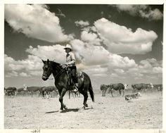 This 1939 photo shows a cowboy roping a calf. (Tribune file photo)