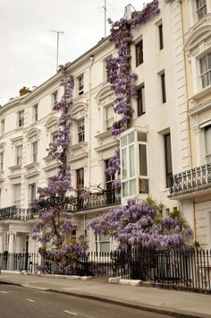 Wisteria grows on a building in London, England (via Exterior Envy /(imagem JPEG, pixels)) London Townhouse, Beautiful Buildings, Beautiful Homes, Beautiful Places, Beautiful Dream, Dead Gorgeous, Beautiful Flowers, Belle Villa, Paris Apartments