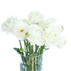 FiftyFlowers.com - White Ranunculus Fresh Flower September to May 15th Delivery