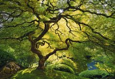 """Entry Title: """" Inner Peace""""  Name: Peter Lik, United States   Category: Professional, Landscapes"""