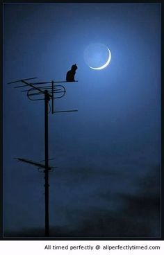 Cat and a moon