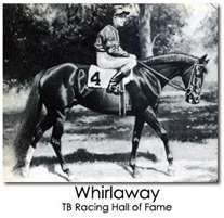 "Whirlaway   1941 Triple Crown Winner, 1941 Horse of the Year, 1942 Horse of the Year. Nicknamed 'The Flying Tail'.Veteran Trainer Jones was said to refer to Whirlaway as ""The Half Wit"" due to his lack of ability to run in a straight line. He had the habit of bearing out, and when he was in the lead he liked to slow down and zig-zag across the track, apparently bored.He had such a burst of power that losing trainers claimed he was dosed with cough syrup to enhance his speed."