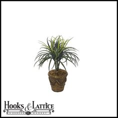 """Outdoor Rated 22"""" Liriope $31.85"""