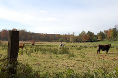 farm friends, via Flickr.