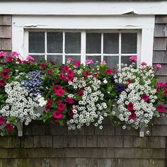 August finds window boxes in full bloom and exploding with color. Window Box Flowers, Window Boxes, Flower Boxes, Flower Ideas, Beautiful Gardens, Beautiful Flowers, Container Flowers, Garden Projects, Garden Ideas