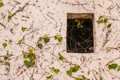 Check out Old window by ChristianThür Photography on Creative Market Architecture Photo, How To Dry Basil, Free Design, Rust, Design Inspiration, Windows, Marketing, Abstract, Glass