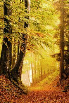 Fall Pathway...