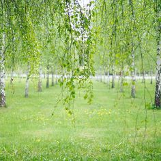 【_kanakana】さんのInstagramをピンしています。 《* 迷子になりそうなくらい広い森の墓地 * 光が差し込むあったかい場所で 墓石には鳥や花のオブジェがそれぞれ付属していて 目に見えない何かが大切にされているような気がした * * #trip #🇸🇪 #Sweden #Stockholm #スウェーデン #ストックホルム #旅行 #travel #海外 #写真 #photo #pic #iphone  #一眼レフ #olympus #vsco #カナタビ_abroad #森の墓地 #skogskyrkogården #森 #🌳#🍃 #カメラ女子 #海外旅行 #女子旅》